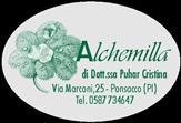ALCHEMILLAsoloVERDE